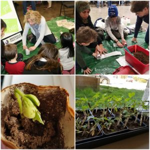 A collage of four photos showing adults and children planting seeds and growing plants