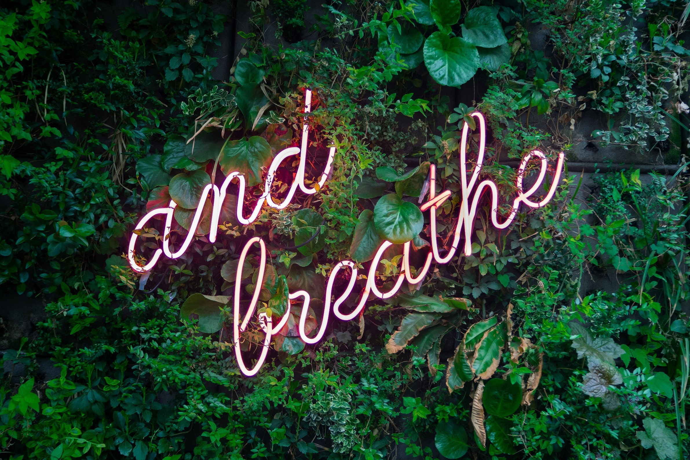 "Greenery with a neon sign on top, stating ""and breathe"""