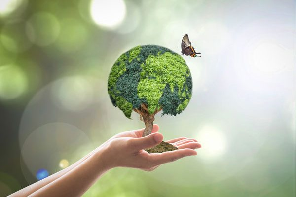 It's Not Easy Being Green: Sustainability At Huntsville Public Library
