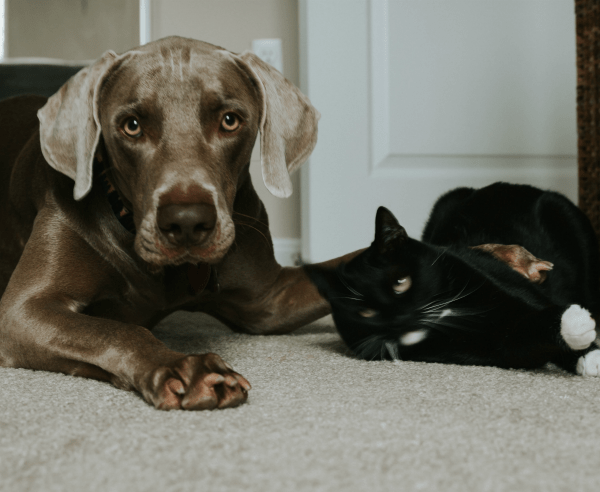 A Dog And A Cat Together
